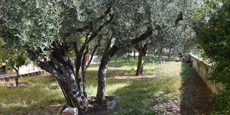 R37_via_Sangro_giardino1
